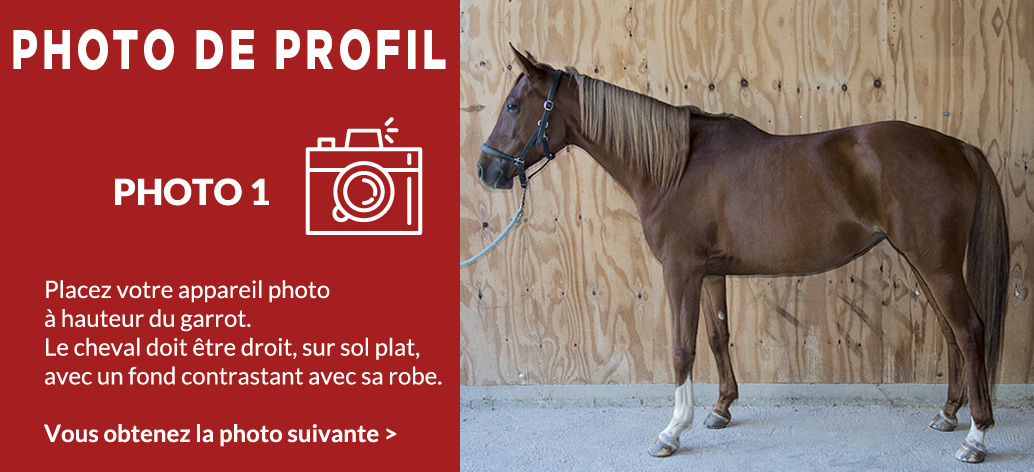 Photo 1 - Prise de mesure de votre cheval