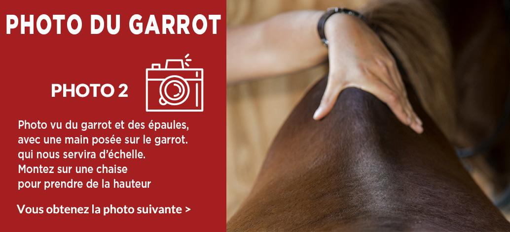 Photo 2 - Prise de mesure de votre cheval