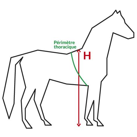 schema-cheval.jpg