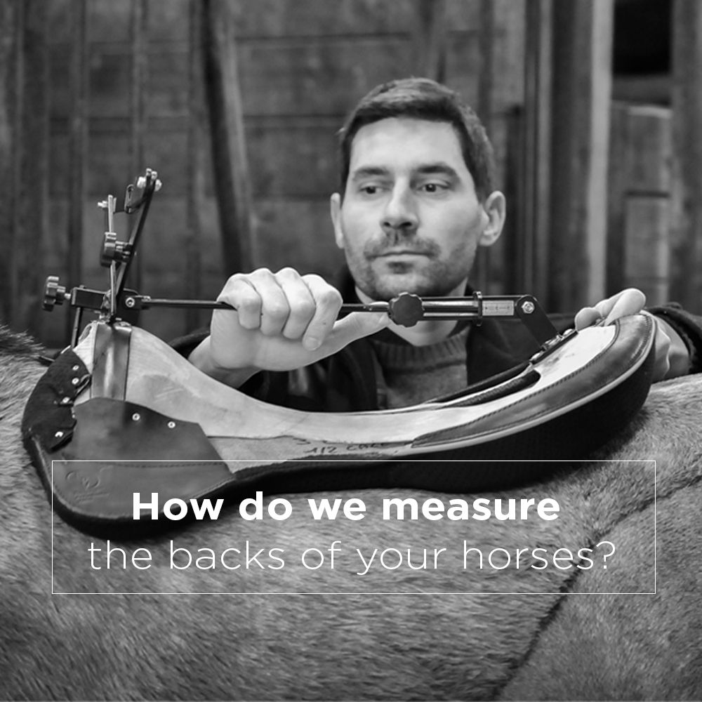 How-do-we-measure-the-backs-of-your-horses