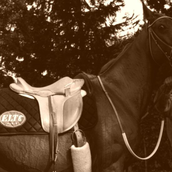 They are beautiful saddle pads Gaston Mercier … but not that !!