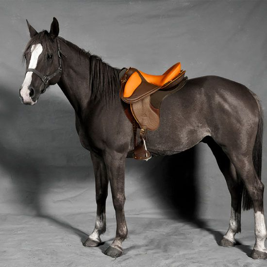 30 years of saddlery Gaston Mercier … Number 1